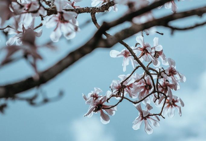 Writing My Own MagnoliaStory